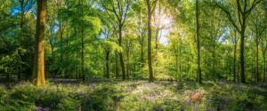beautiful forest in sunlight