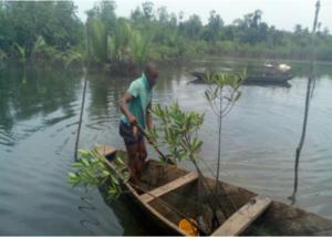 mangrove planters 01