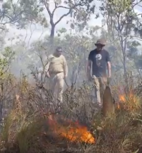 a slow burn of bushland